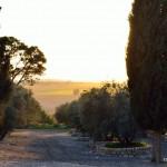 Sonneuntergang in Latrun | Закат в Латруне