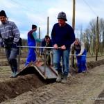 Arbeit auf der Himbeerplantage
