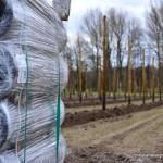 Himbeerplantage