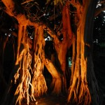 Nächtlicher Garten des En Gedi Resort Hotel | Ночной сад в Eшn Gedi Resort Hotel