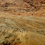 Wüstensteinböcke auf  Mitzpe Ein Gedi Berghang | Горные козлы на склонах  Мицпе Айн Геди