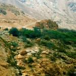 Wüstenoase | Оазис