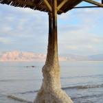 Salzbedecktes Holz | Дерево в соли