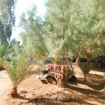Kibbuz En Gedi | Кибуц Айн Геди