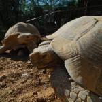 Zoo im Kibbuz En Gedi | Зоопарк кибуца Айн Геди
