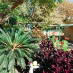 Botanischer Garten im Kibbuz En Gedi | Ботанический сад кибуца Айн Геди