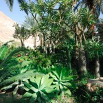 Botanischer Garten im Kibbuz En Gedi   Ботанический сад кибуца Айн Геди