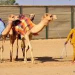 Dubai Camel Racing Club
